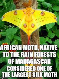 Moth Meme - moths imgflip
