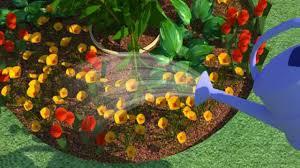 home flower gardening tips for beginners youtube