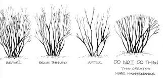 tips on pruning provided by nature s way landscaping