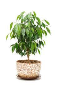 8 houseplants to improve indoor air quality u2013 growninthecity