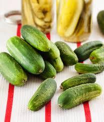 boston pickling cucumber high yield short thin skin