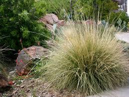 native grass plants plant search