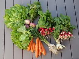 comment cuisiner le navet comment cuisiner un panier amap du printemps et quels légumes