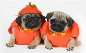 wallpaper for halloween image gallery of cute puppies wallpaper for halloween