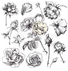 Flower Drawings Black And White - best 25 flower illustrations ideas on pinterest flower sketches