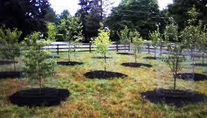 Backyard Fruit Trees Peach Twig Borer Backyard Orchard Irrigation U2013 Ipm Pest Advisories