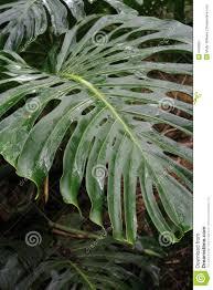 hawaii plants hawaii plants stock image image of erosion grass desert 6493681