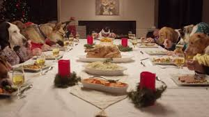 dogs at dinner table holiday party with 13 dogs and a cat wins the internet abc7news com