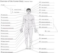 Essentials Of Human Anatomy And Physiology Notes Anatomy Basics At Drury University Studyblue Anatomy Review