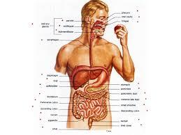 Human Anatomy Terminology Female Anatomy Full Body Fosfe Com