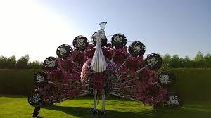 dubai miracle garden etb travel news america