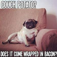 Meme To - funny pug pictures nice funny pug meme to start this december day