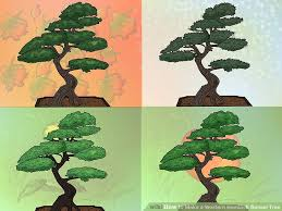 how to make a western hemlock bonsai tree 8 steps with pictures