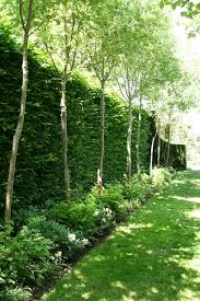 Backyard Privacy Trees 10 Different And Great Garden Project Anyone Can Make 6 Cow