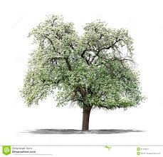 green tree on a white background stock image image 31183641
