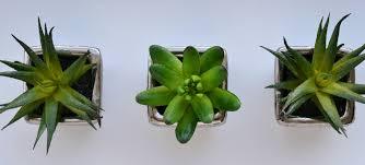 bathroom design wonderful indoor plants suitable for bathrooms