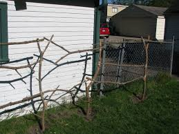 trim a tree build a trellis