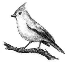 needle book bird sketches