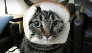 Cat In Bread Meme - memes archives cats vs cancer