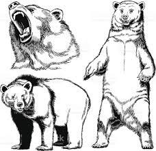 bear clip art vector images u0026 illustrations istock