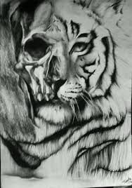 between and white tiger and skull by turanneth on