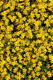 Heat Resistant Plants 14 Perennials For Full Sun Hgtv