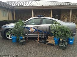 Recovering Cannabis Plants From High by Kentucky Local News Station Meteorologist Busted U0027for Growing