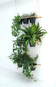 house plants low light hanging plants low light here are some instructions to make a
