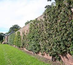 Urban Wall Garden - what happened to the walled garden way of producing food using