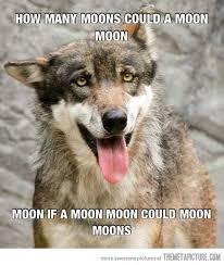 Moon Moon Meme - how many moons could a moon moon moon moon memes and animal
