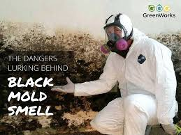 simple dangers of mold about types of mold on uncategorized design