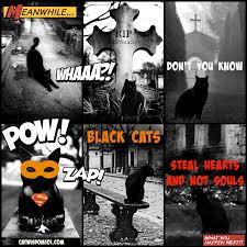 spooktacular wow or what cemetery black cats u2013 cat wisdom 101