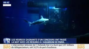 chambre aquarium grâce à airbnb ce a passé la nuit entouré de requins la