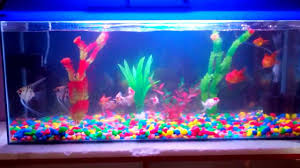 fish tank with all kind of fish youtube
