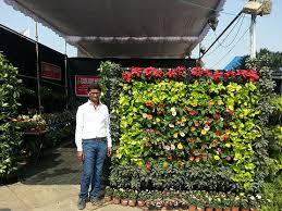vertical gardens sanjay nursery plant nursery in pune mumbai india vertical
