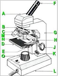 Parts Of A Compound Light Microscope Microscope Parts