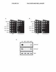 methylated h3k4 a transcription associated histone modification