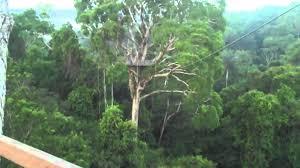 canopy amazon amazon jungle canopy tour youtube