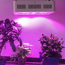 most efficient grow light usa de stock cob 800w led grow light full spectrum with 2 years