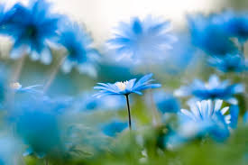 Beutifull Beautiful Spirits Why Choosing Nature Will Only Advance Human