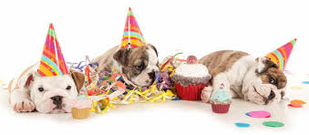 what you need to plan the perfect birthday for your dog