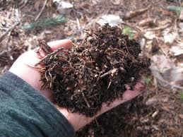 Fiber Soil by How To Have A Self Sustaining Microfauna Vivarium Reptiles Guru