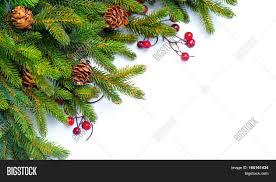 christmas tree cones border image u0026 photo bigstock