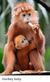 Baby Monkey Meme - monkey and monkey meme on me me