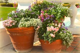 potted flowers potted flowers photograph by covino