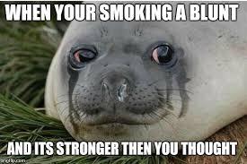 Seal Meme Generator - crying seal meme generator imgflip