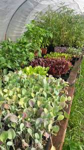 final day plant sale sat only 9am 2pm