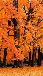best 25 fall wallpaper ideas on pinterest iphone wallpaper fall