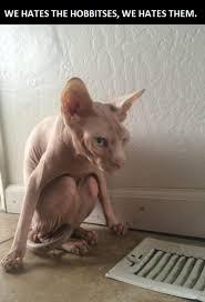 Hairless Cat Meme - gollum the cat
