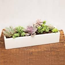 rectangular white planter succulent google search succulents